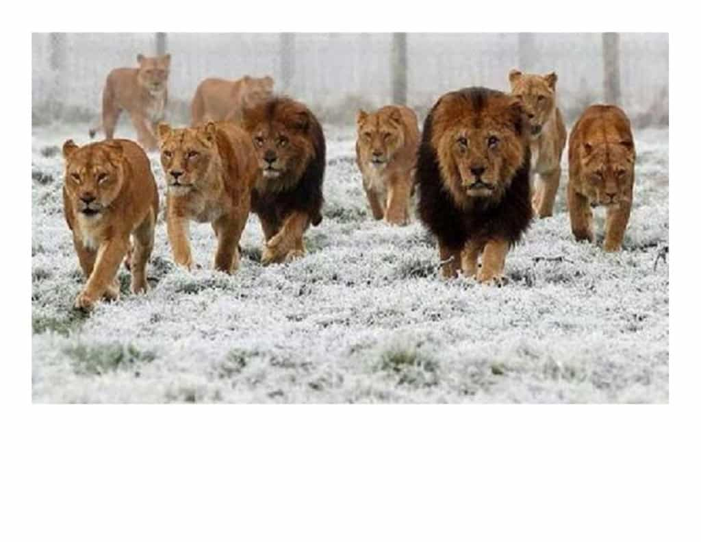 Lions picture with leader