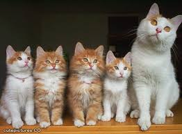 cats pic