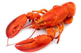 Lobster pic 1